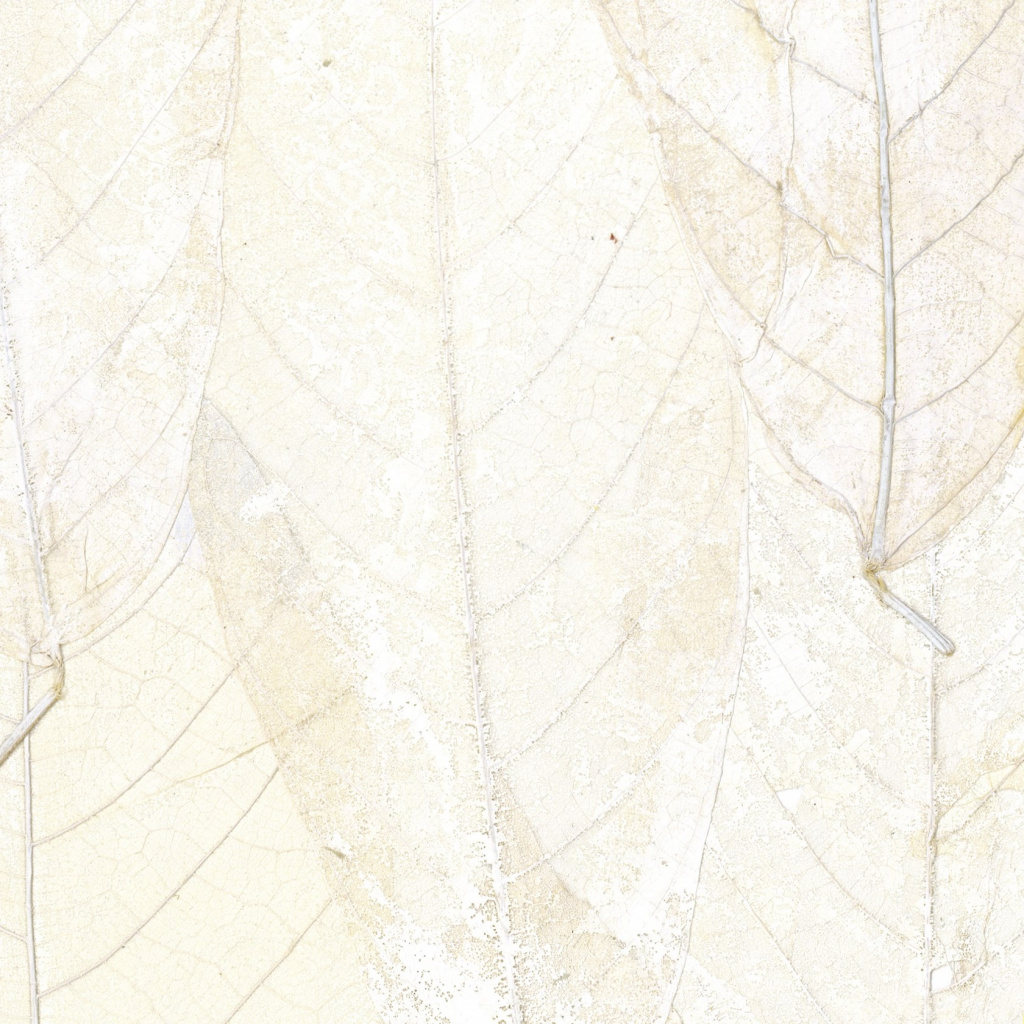 Wallpaper from the blanche-neige line by Elitis