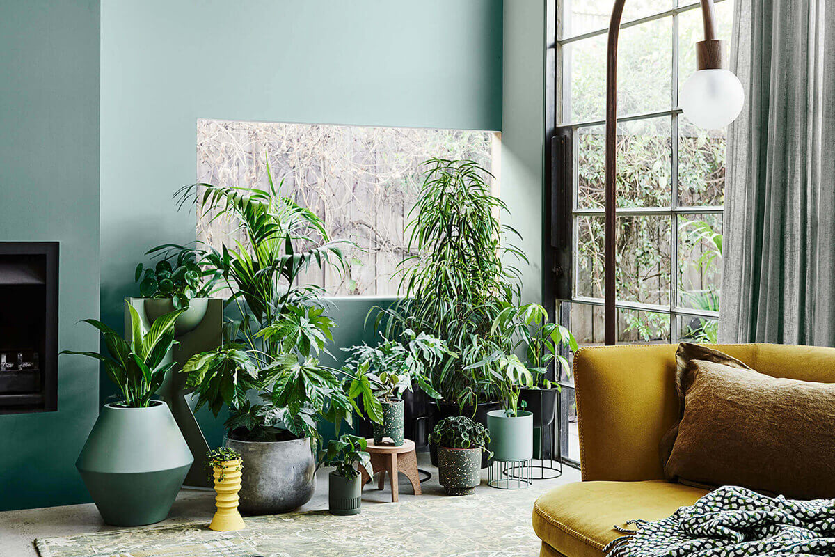 Green zone: how to decorate the interior with plants?